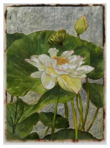Summer Water Lilies #1