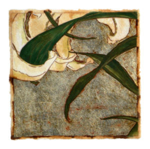 Silver Lily Series #53